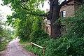 80-385-5027 Kyiv Yanata Oak SAM 9966.jpg