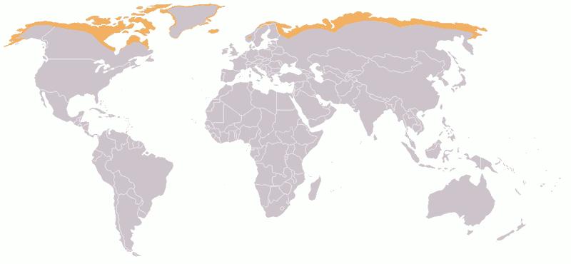 800px-Map-Tundra