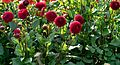 ADD SOME COLOUR TO YOUR LIFE (FLOWERS IN A PUBLIC PARK)-120122 (28650144414).jpg