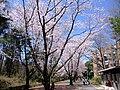 AIST Sakura - panoramio.jpg