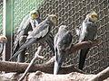 A Silesian Zoological Garden 100.JPG