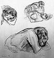 A gorilla. Lithograph by Jonathan Kingdon. Wellcome L0024957.jpg