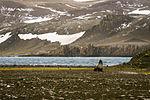 A lone seal on Barrientos Island, Antarctica.jpg