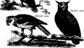 A new system of the natural history of quadrupeds, birds, fishes, - and insects Fleuron N011120-11.png