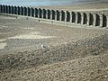 A seagull and a groyne, Hastings beach - geograph.org.uk - 1563749.jpg