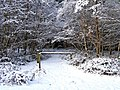 A snow covered path at Hawkbatch, Wyre Forest - geograph.org.uk - 1670976.jpg