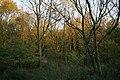 A walk through Twyford Wood, No 11 - geograph.org.uk - 272133.jpg