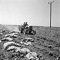 Aardappeloogst waarbij een trekker de grond losmaakt en het loof verwijdert, Bestanddeelnr 255-4590.jpg