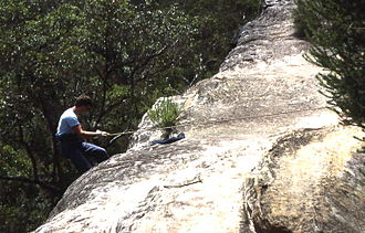 North Wahroonga, New South Wales - Abseiling in bush near Cliff Avenue