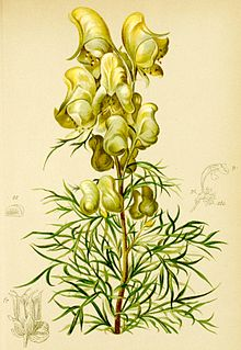 Aconitum anthora Atlas Alpenflora.jpg