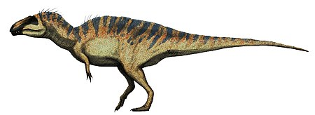 Acrocanthosaurus restoration.jpg