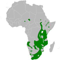 Acrocephalus gracilirostris distribution map.png