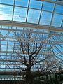 Adansonia digitata KirstenboshBotGard09292010C.JPG