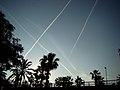 Aero Palms - panoramio.jpg