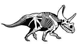 Resultado de imagen de agujaceratops