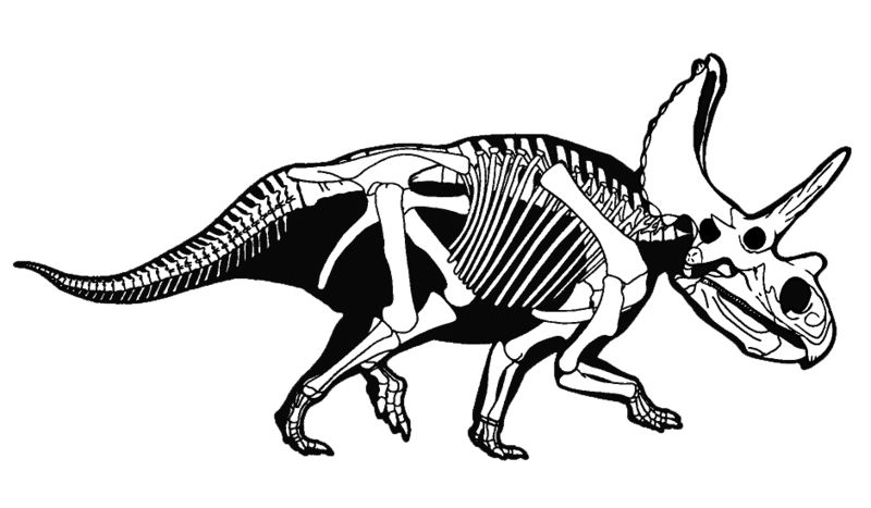 File:Agujaceratops.jpg