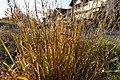 Albigny @ Annecy-le-Vieux (50679182211).jpg