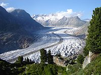 The Aletsch Glacier. Swiss Pines (Pinus cembra) are visible in the foreground.