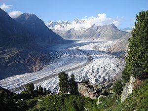 Riederalp - Aletsch Forest above the glacier