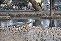 Alipore Zoological Garden - Kolkata 2011-01-09 0121.JPG