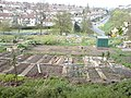 Allotments by Gledhow Valley Road (2) - geograph.org.uk - 408828.jpg