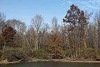 Alum Creek State Park in November 2.jpg