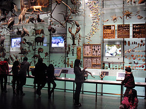 """AMNH Exhibitions Lab - The """"wall of life"""" is a three-dimensional cladogram consisting of over five hundred life-sized models."""