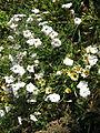 Amin al-Islami Park - Trees and Flowers - Nishapur 057.JPG