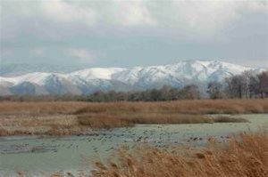Aammiq Wetland - The wetlands in winter