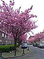 Amsterdam Noord 04 2014 - panoramio (13).jpg