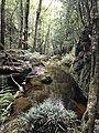 Angel Creek, Budawang National Park, NSW.jpg