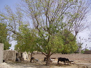 Animal section of a rural Punjabi home under n...