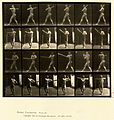Animal locomotion. Plate 274 (Boston Public Library).jpg