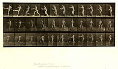 Animal locomotion. Plate 301 (Boston Public Library).jpg