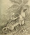 Animals in action; studies and stories of beasts, birds and reptiles; their habits, their homes and their peculiarities (1901) (14568992587).jpg