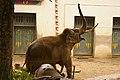 Antwerp zoo, Belgium (1400243902).jpg