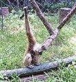 Ape inside a cage.jpg