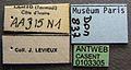 Apomyrma stygia casent0103305 label 1.jpg