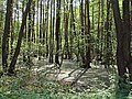 Applūdis mežs 002.jpg