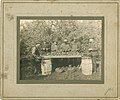 Apple Harvest, c. 1890-1900 - 40797576245.jpg