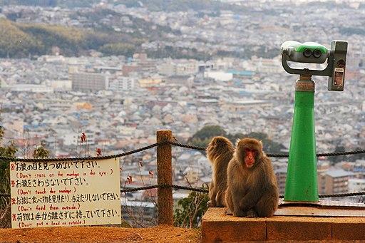 Arashiyama Monkey Park Iwatayama in 31 Dec 2012