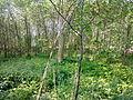 Arbres et arbustes non-identifiés à Grez-Doiceau 001.jpg
