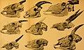 Archiv für Naturgeschichte (1907) (20305156396).jpg