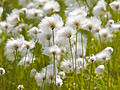 Flora And Fauna Of Greenland Wikipedia