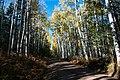 Around the Peaks Loop Hart Prarie Road (21770509436).jpg
