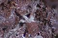 Artroeite-purple-sky-minerals.jpg