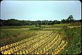 Ashiya-machi, Onga-gun, Fukuoka Prefecture - Rural Scene (4).jpg