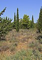 Attica 06-13 Hills of Hymettus 20 Kalogeros.jpg