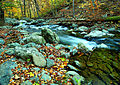 Autumn-flowing-forest-river - Virginia - ForestWander.jpg