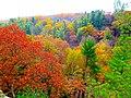 Autumn Colors - panoramio (5).jpg